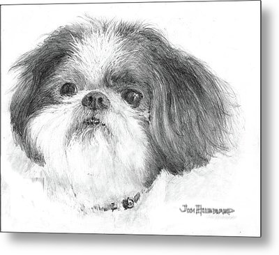 Shih-tzu Metal Print by Jim Hubbard