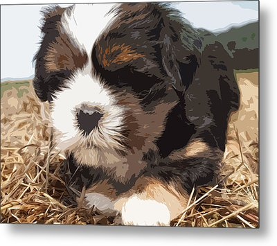 Shih Tzu On A String Metal Print by Robert Margetts