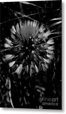 Metal Print featuring the photograph Shining by Simona Ghidini