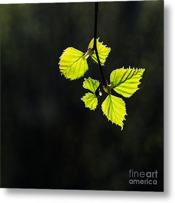 Metal Print featuring the photograph Shining Springtime by Kennerth and Birgitta Kullman