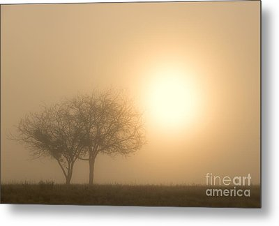 Shining Through Metal Print by Mike  Dawson