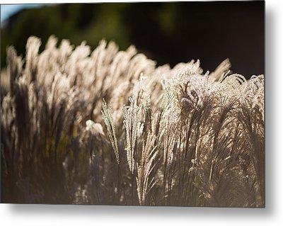 Shining Weeds Metal Print by Mike Lee