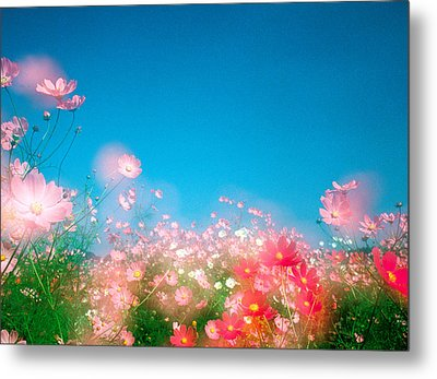 Shiny Pink Flowers In Bloom With Blue Metal Print by Panoramic Images