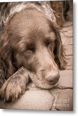 Shishka Dog Dreaming The Day Away Metal Print