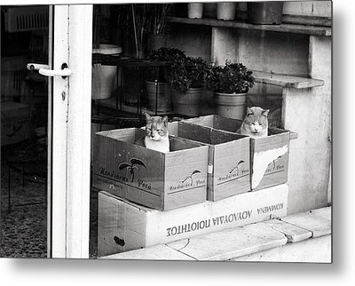 Metal Print featuring the photograph Shop Window Cats by Laura Melis