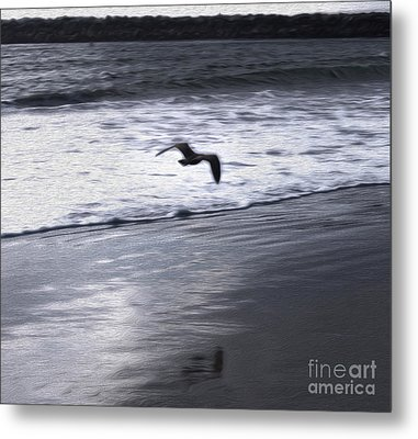 Shore Bird -02 Metal Print by Gregory Dyer