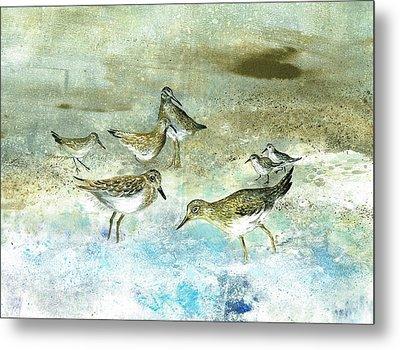 Shore Birds Metal Print by Nancy Gorr