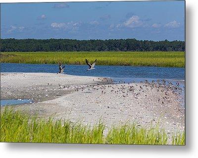 Shorebirds And Marsh Grass Metal Print