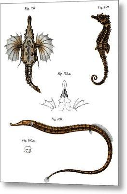Short Dragonfish Metal Print by German School