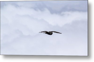Short Eared Owl Above The Clouds Metal Print by Brad Scott