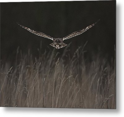Metal Print featuring the photograph Short Eared Owl Focused by Paul Scoullar