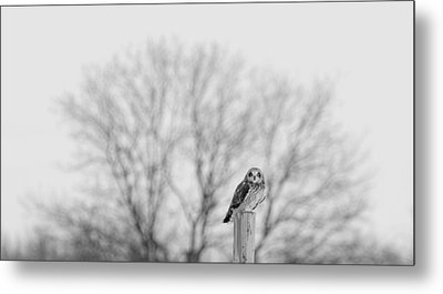 Short-eared Owl In Black And White Metal Print