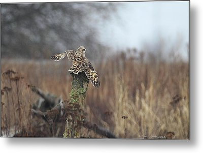 Metal Print featuring the photograph Short Eared Owl In Habitat by Daniel Behm