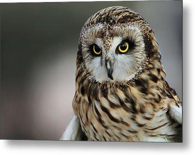 Short Eared Owl Portrait Metal Print by Dan Sproul
