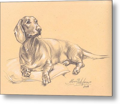 Short-haired Dachshund On A Pillow Metal Print