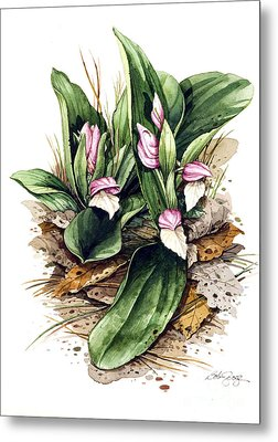 Metal Print featuring the painting Showy Orchis by Bob  George