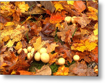 Metal Print featuring the photograph Shrooms by Jim McCain