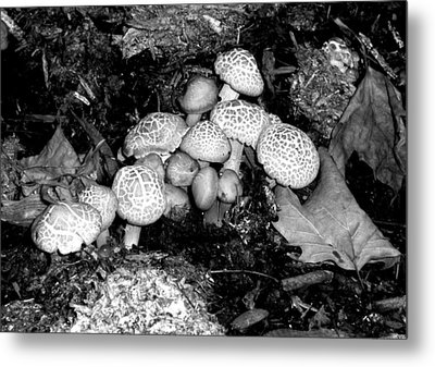 'shrooms' Metal Print
