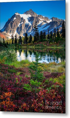 Shuksan Autumn Metal Print by Inge Johnsson