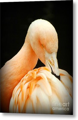 Metal Print featuring the photograph Shy by Clare Bevan