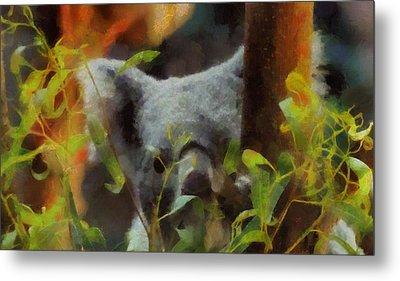Shy Koala Metal Print by Dan Sproul