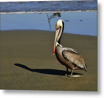 Metal Print featuring the digital art Shy Pelican by Gandz Photography