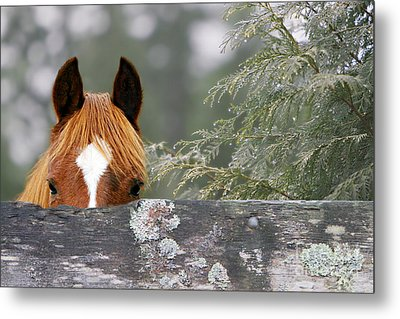 Shyness Metal Print by Michelle Twohig