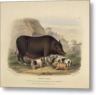 Siamese Breed Metal Print by British Library