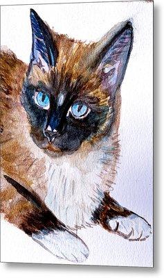 Siamese Cat Portrait Metal Print