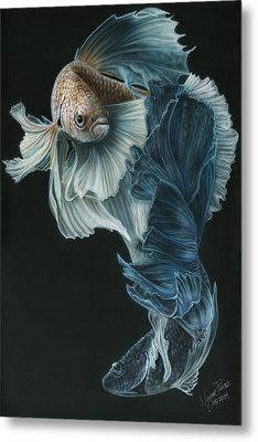 Siamese Fighting Fish Three Metal Print