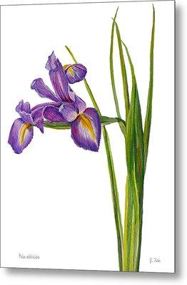 Siberian Iris - Iris Sibirica Metal Print