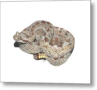 Sidewinder Metal Print by Cindy Hitchcock