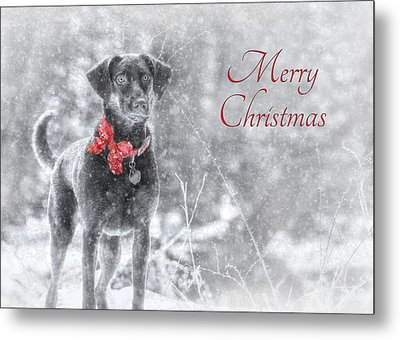 Sienna - Merry Christmas Metal Print by Lori Deiter