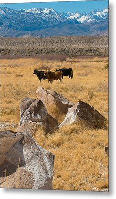 Metal Print featuring the photograph Sierra Cattle by Jan Davies
