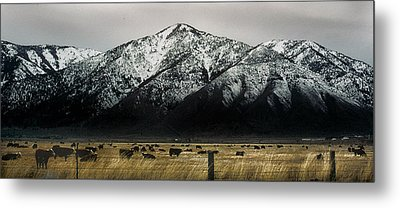 Sierra Nevada Mountains Near Lake Tahoe Metal Print by Steve Archbold