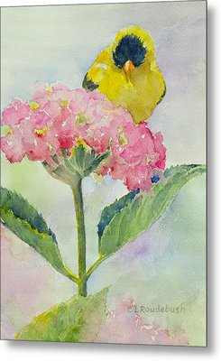 Siesta Atop The Hydrangea Metal Print by Cynthia Roudebush