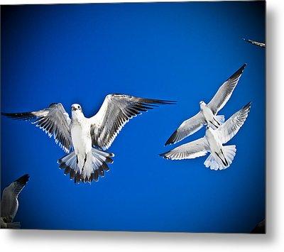 Siesta Key Sea Gulls Metal Print by Andrea Floyd
