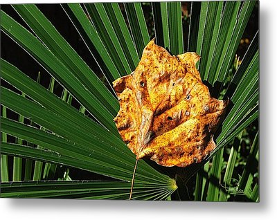 Metal Print featuring the photograph Sign Of Fall In The South by Ludwig Keck