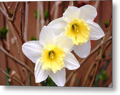 Metal Print featuring the photograph Sign Of Spring by Judy Palkimas