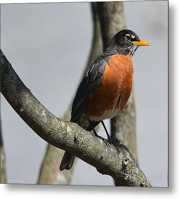 Signs Of Spring Metal Print by Kathy Eickenberg
