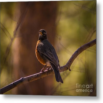 Signs Of Spring Metal Print by Mitch Shindelbower