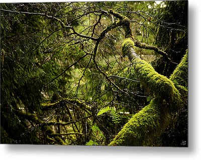 Metal Print featuring the photograph Silence In The Green Forest by Lisa Knechtel