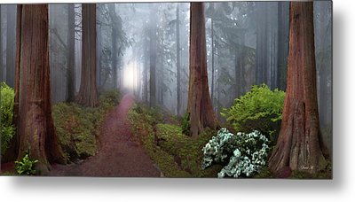 Silence Of The Forest Metal Print by David M ( Maclean )