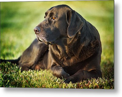 Metal Print featuring the photograph Silence by Sharon Jones