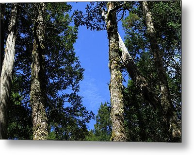 Silent Giants All Profits Go To Hospice Of The Calumet Area Metal Print
