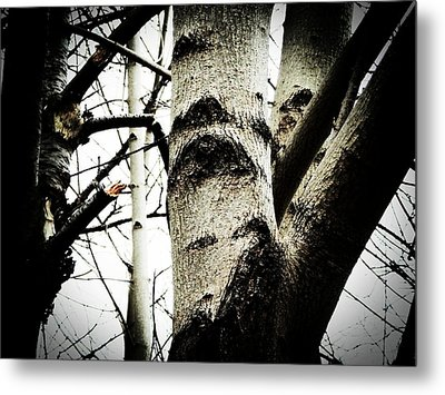 Metal Print featuring the photograph Silent Witness by Zinvolle Art