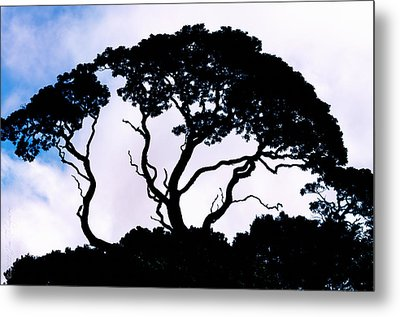 Metal Print featuring the photograph Silhouette by Jim Thompson