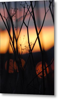 Silhouette Of Old Queens Metal Print by Jani Freimann