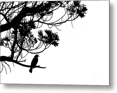 Silhouette Of Singing Common Blackbird In A Tree Metal Print