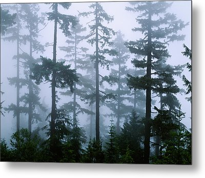 Silhouette Of Trees With Fog Metal Print